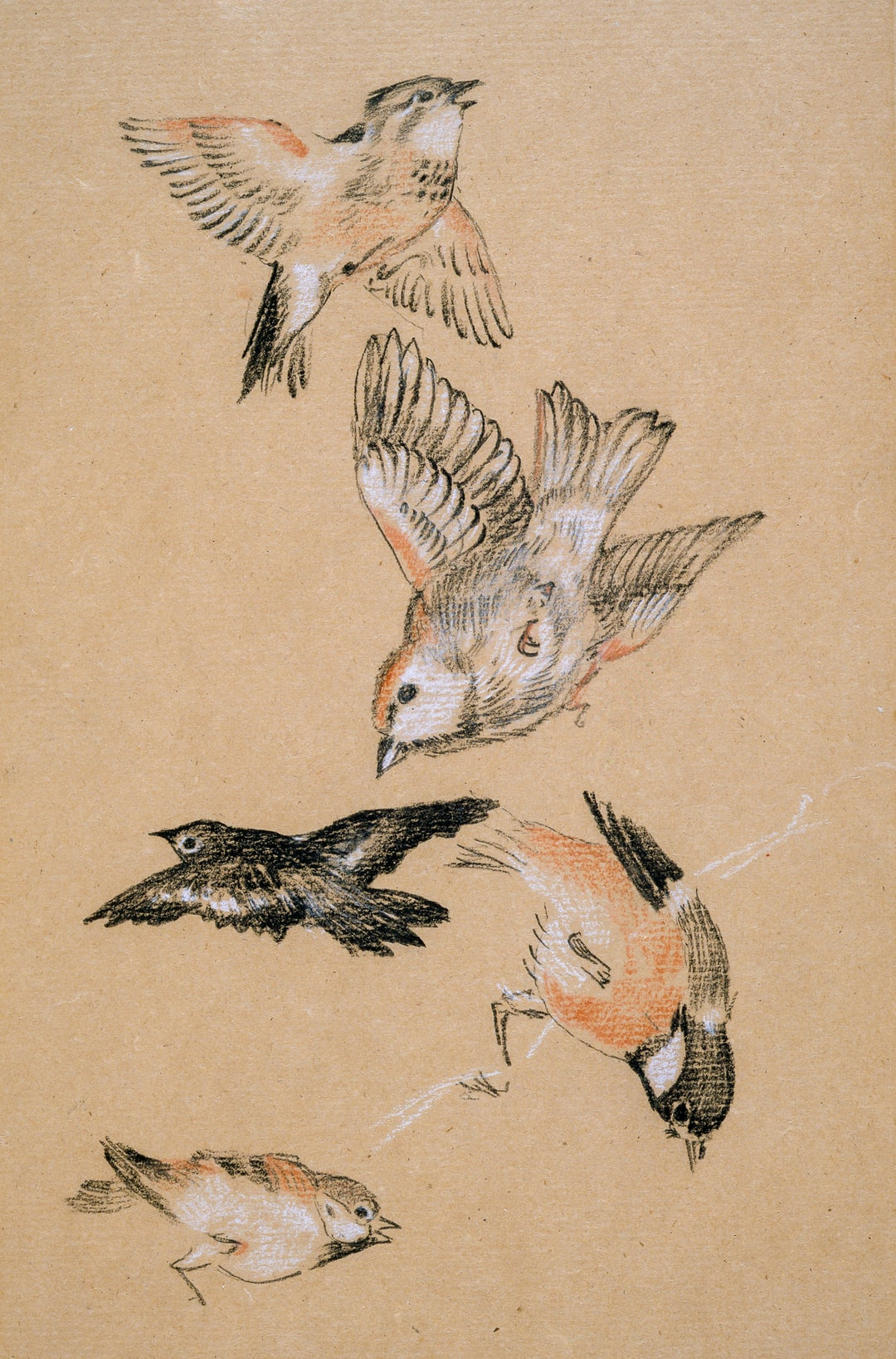 Love leading the Pilgrim - Study of Birds: Finches, 1897 By Sir Edward Burne-Jones