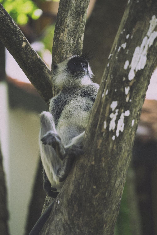 black and white monkey on tree