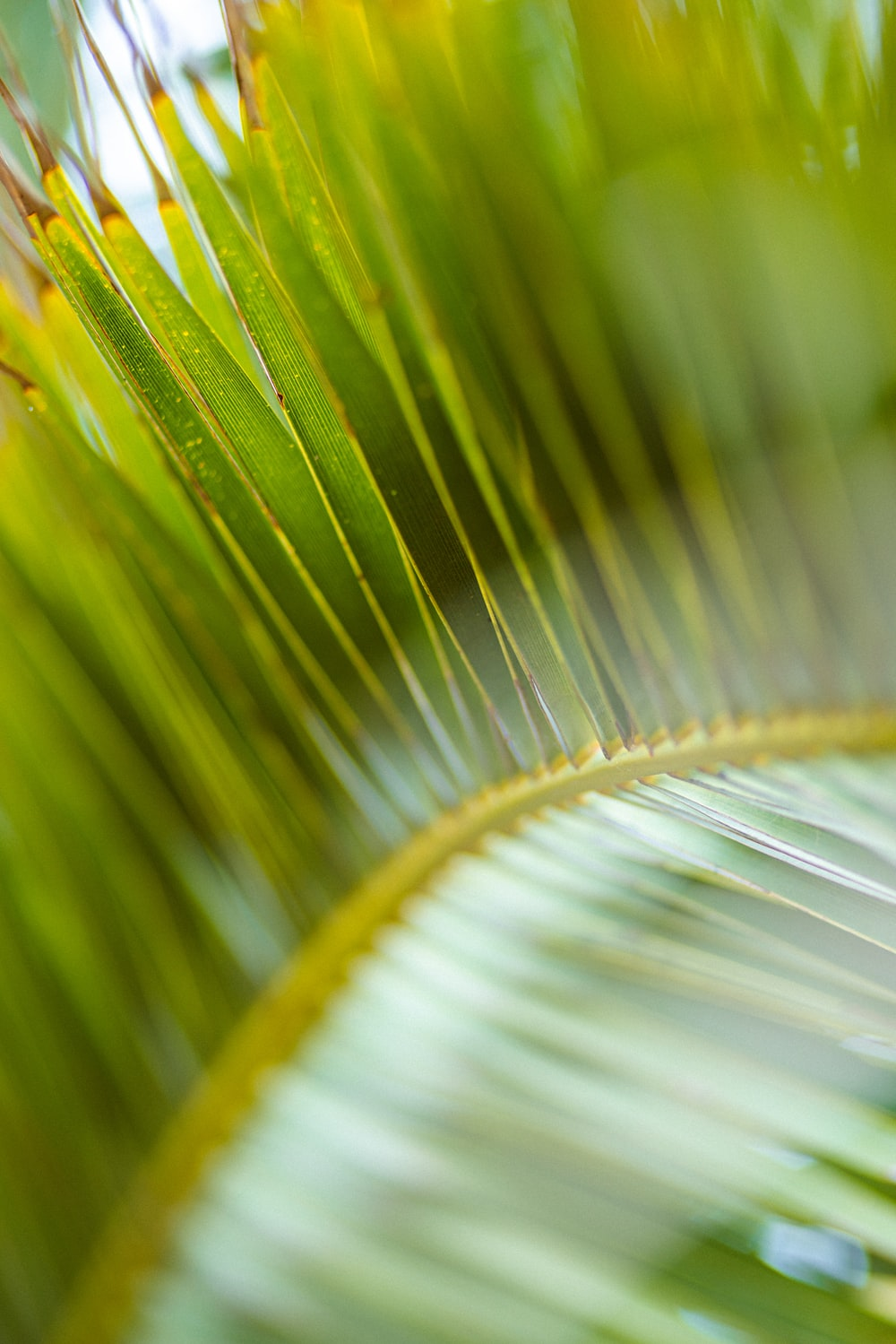 green and brown leaf in macro photography