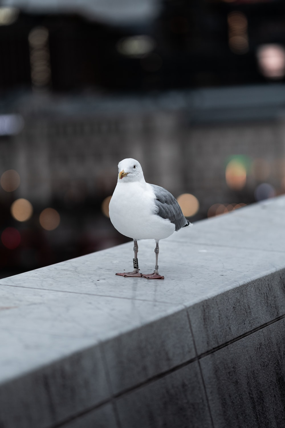 white and gray bird on gray concrete surface during daytime