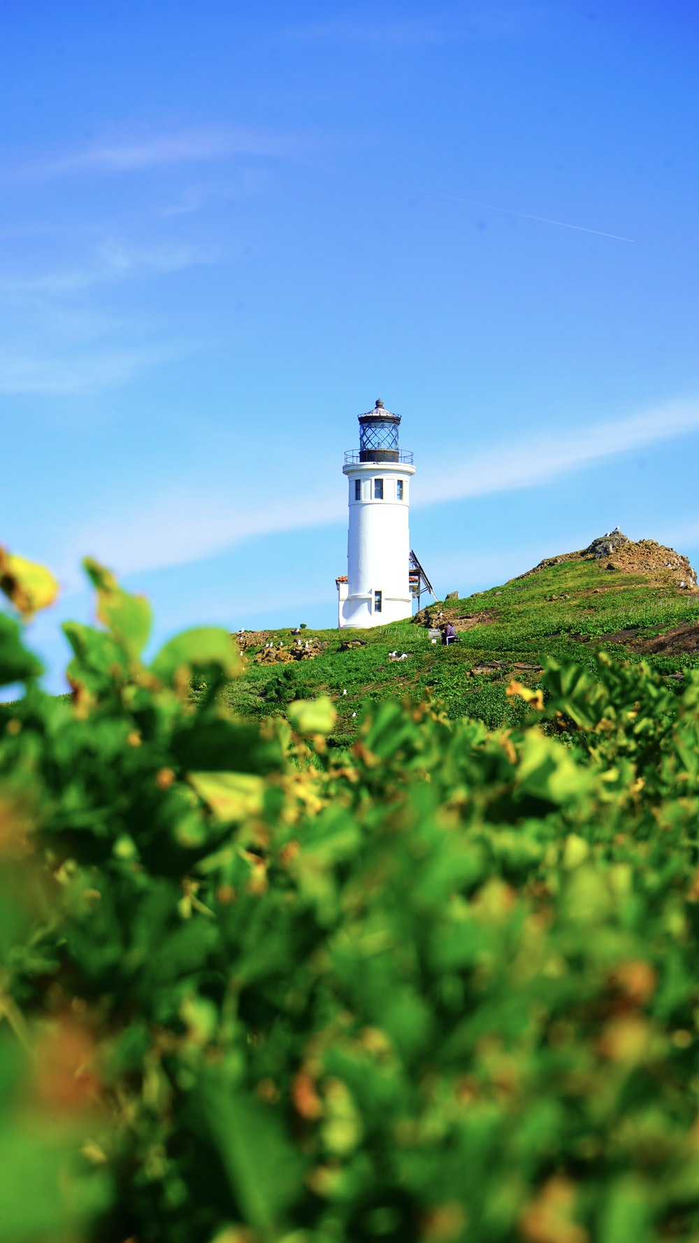 white lighthouse on green grass field under blue sky during daytime