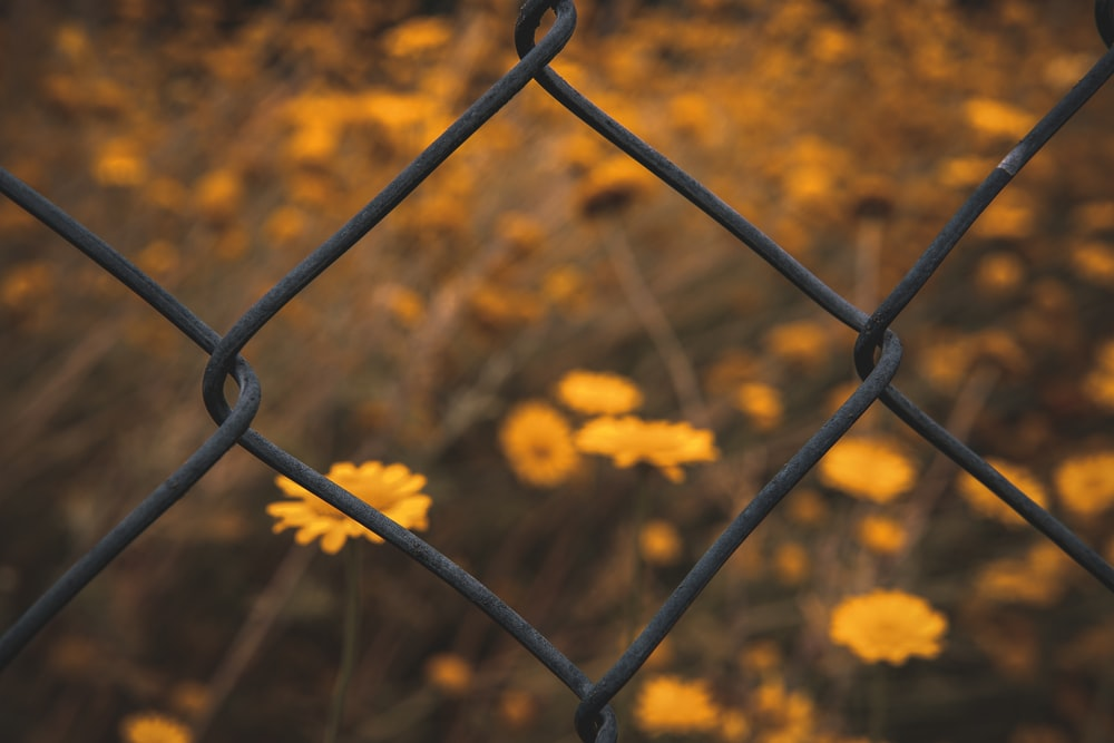 yellow flowers beside gray steel fence during daytime