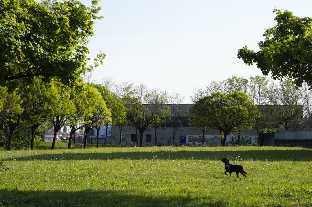 black short coat medium dog on green grass field during daytime