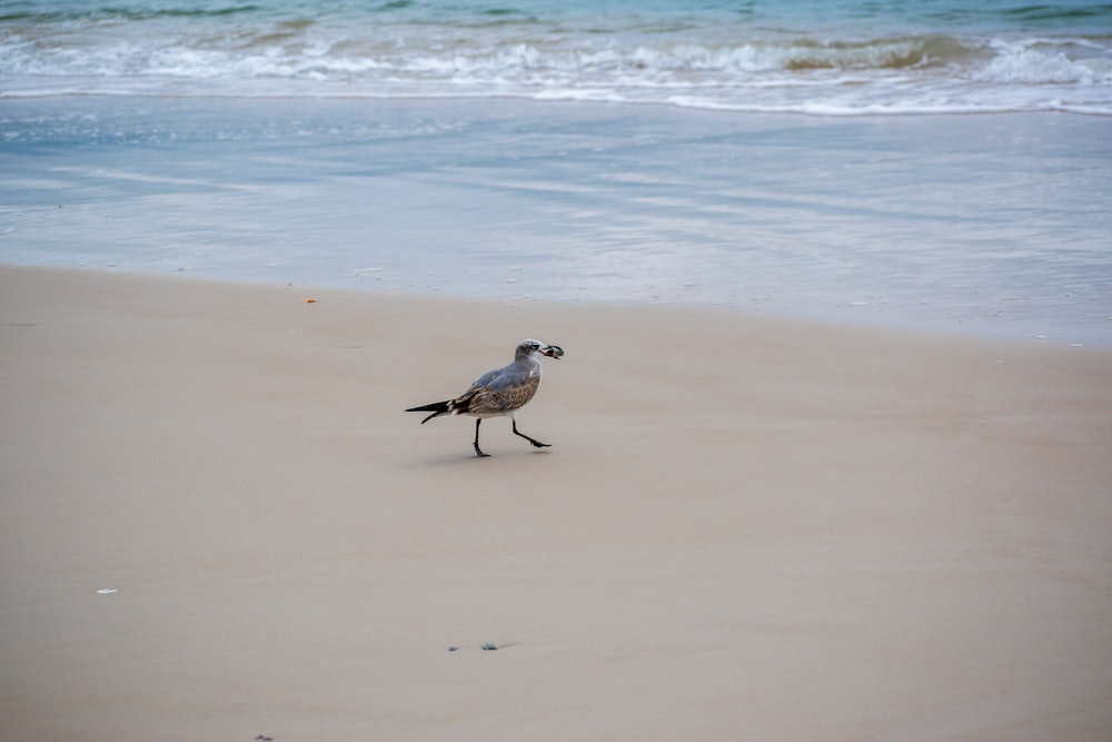 white and gray bird on beach during daytime