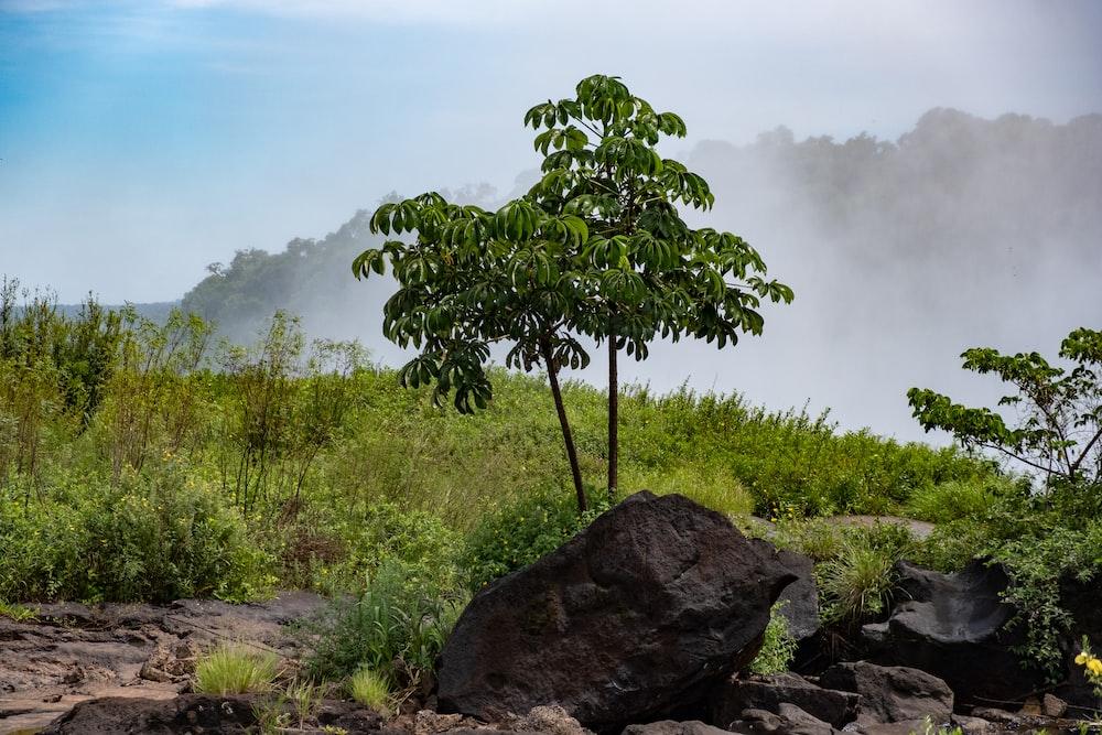 green tree on gray rock