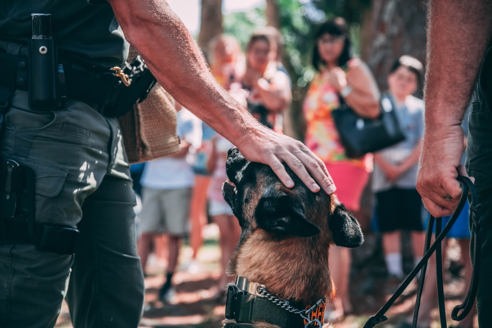 man in black t-shirt holding brown and black short coated dog during daytime