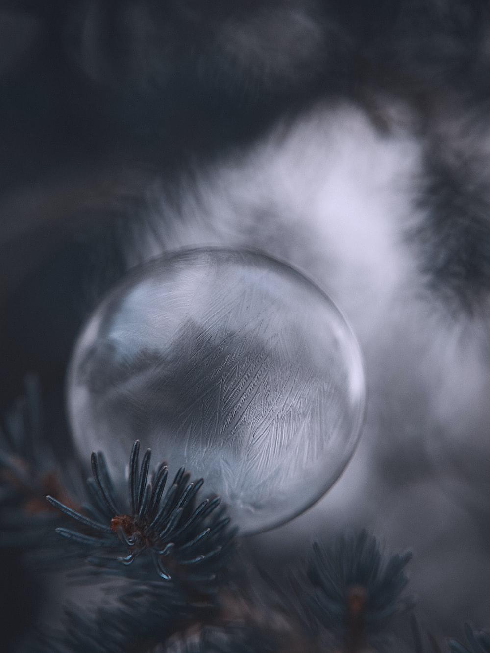 water drop on white dandelion