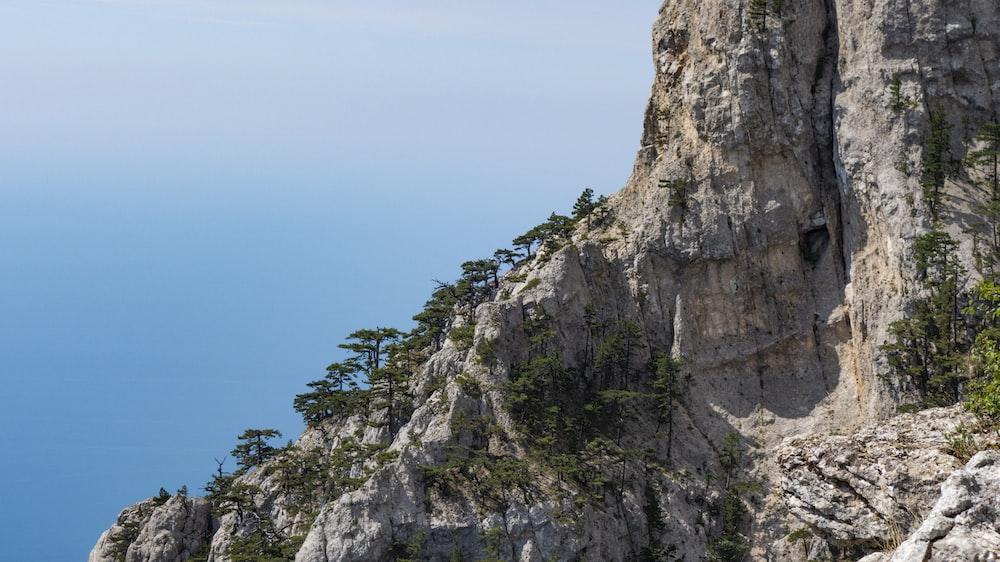зеленые деревья на скалистой горе под голубым небом в дневное время