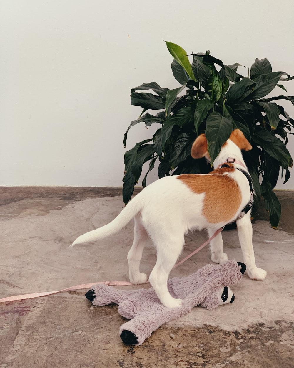 white and orange cat on brown floor