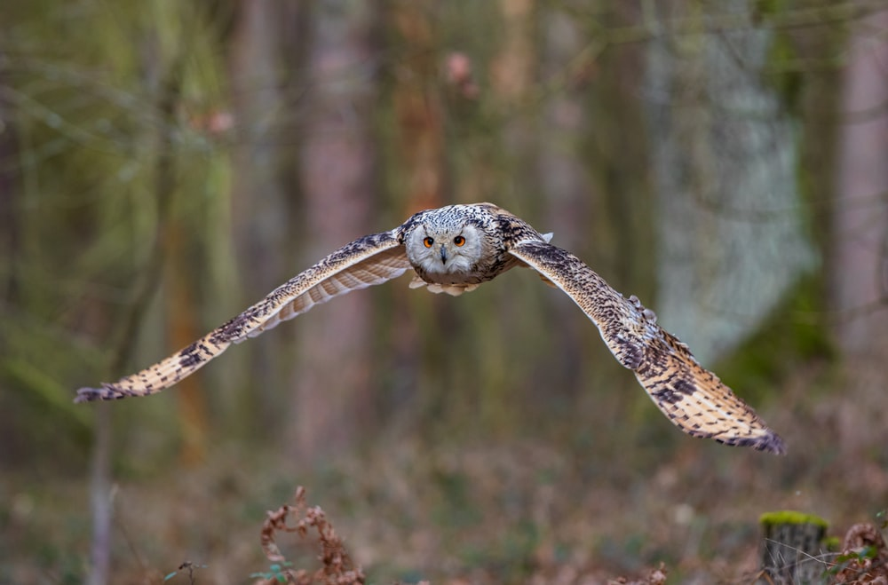 black and white owl on brown wooden stick during daytime