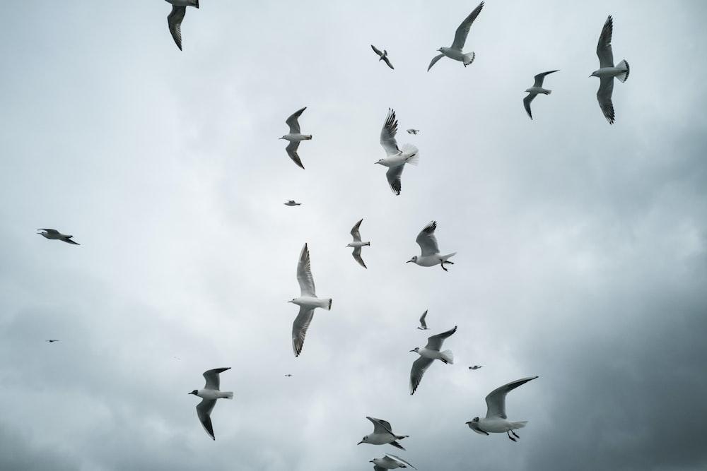 white and black birds flying during daytime