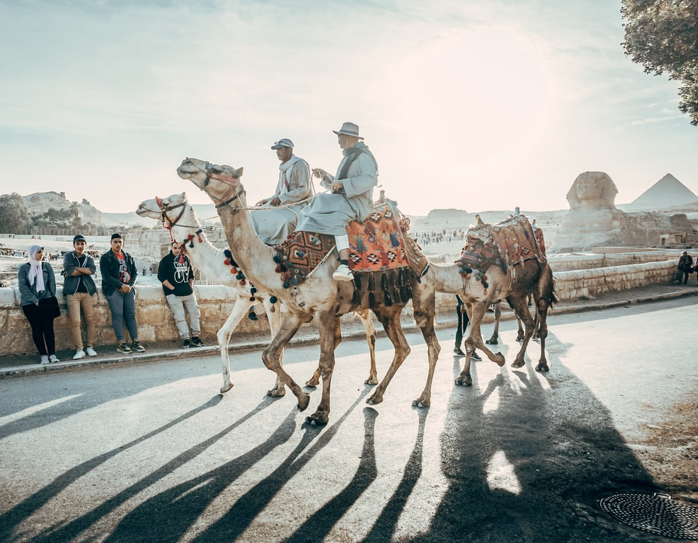 people riding camel on road during daytime