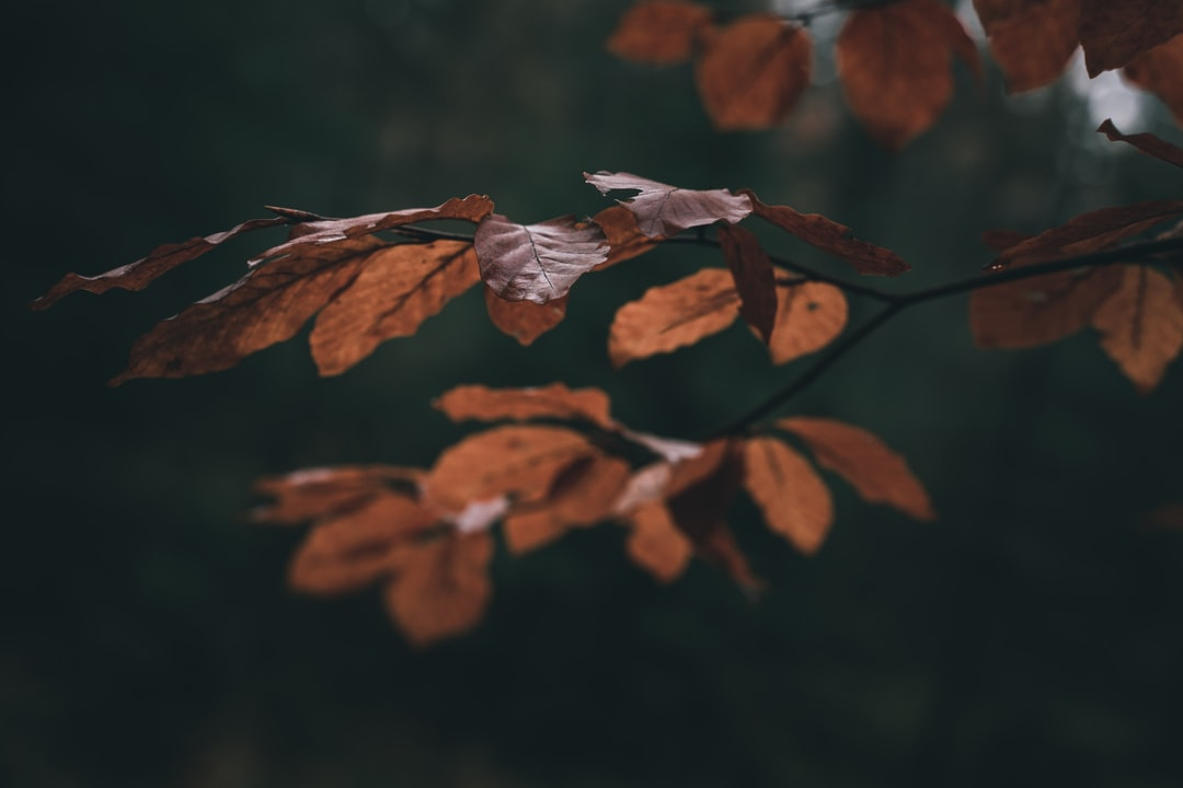 Brown Dried Leaves In Tilt Shift Lens - unsplash