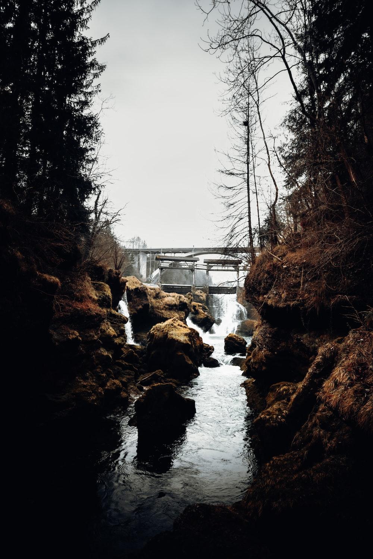 bridge over river between bare trees