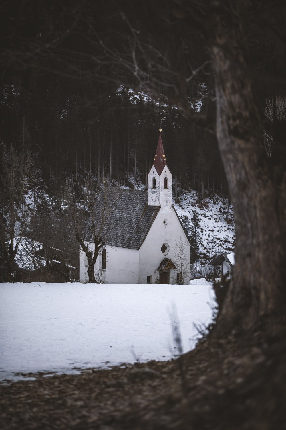 white and brown cathedral in the middle of the forest