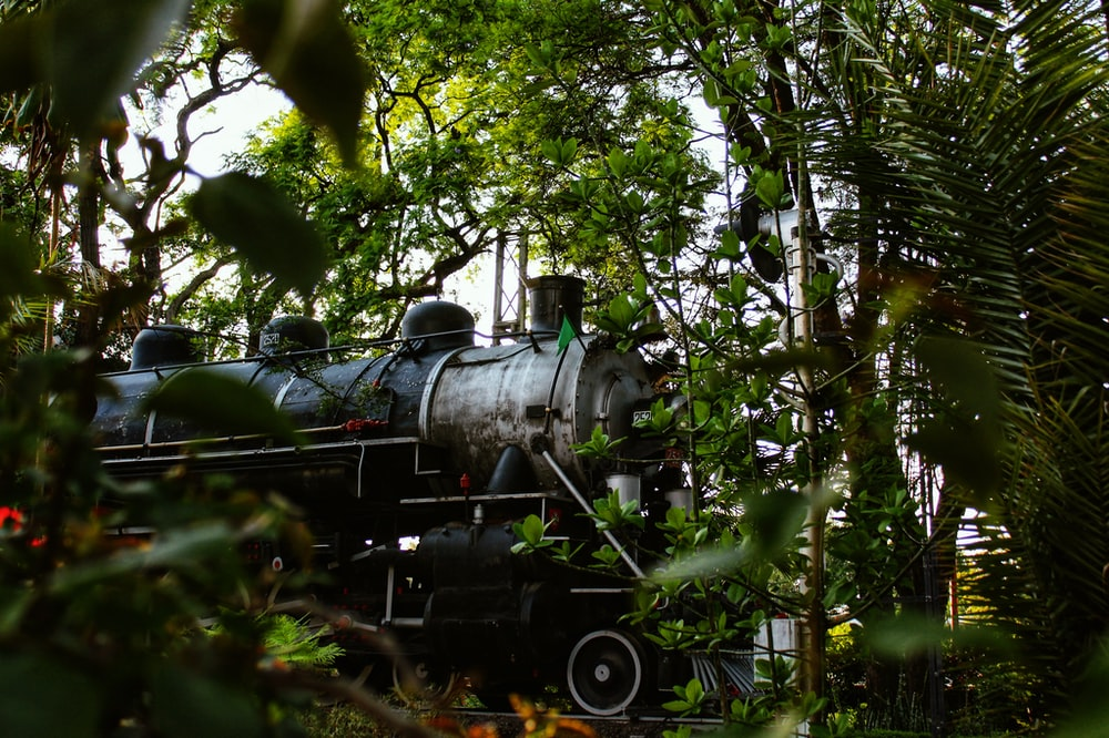 black train in the middle of the forest during daytime