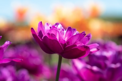 purple flower in tilt shift lens cupid teams background