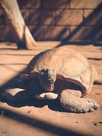 A turtle's vest  vest stories
