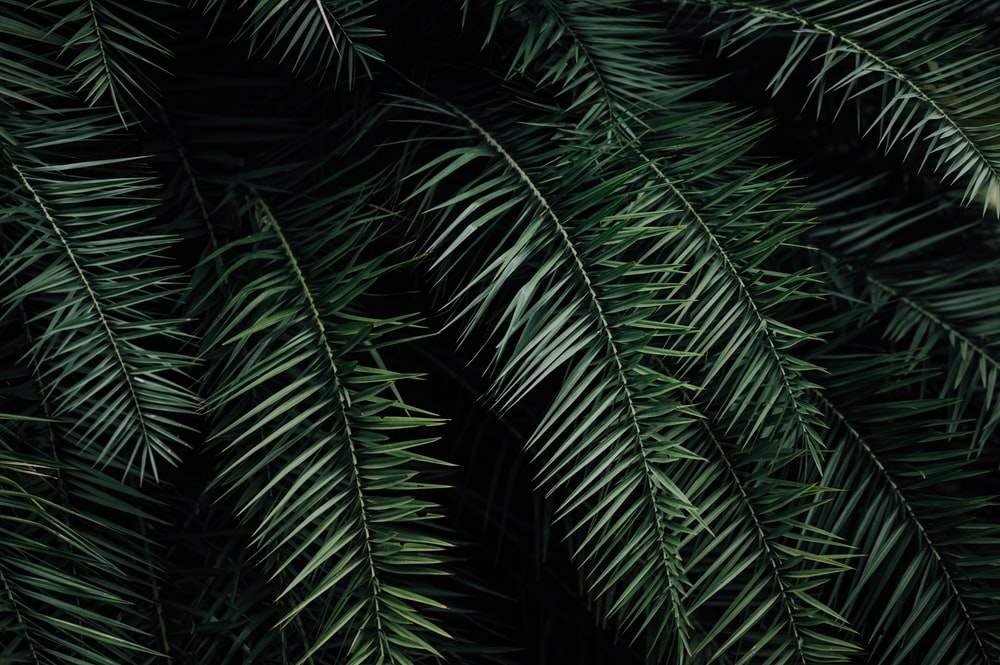 green palm plant during night time
