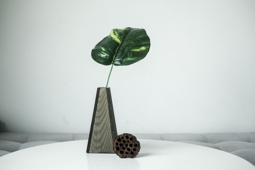 Wooden Vase With Evergreen Leaf and Dried Lotus Seed Pod  - unsplash