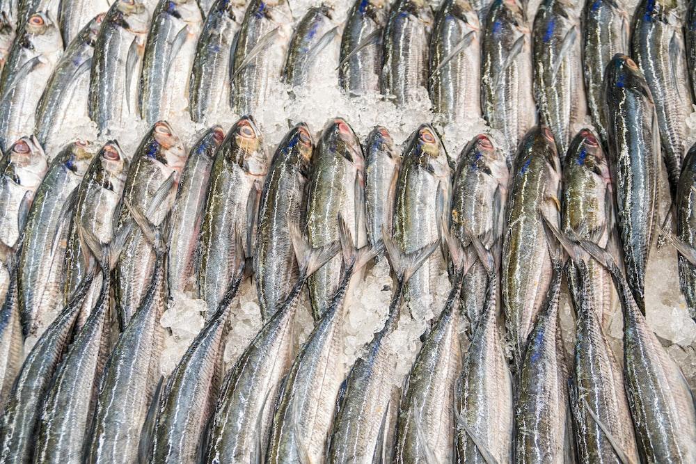 gray fish on white textile