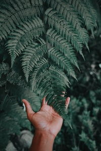 person holding green fern plant