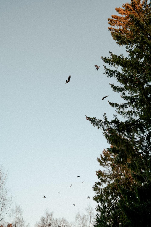 bird flying over green tree during daytime