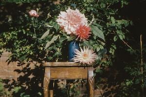 pink flowers in blue ceramic vase on brown wooden table
