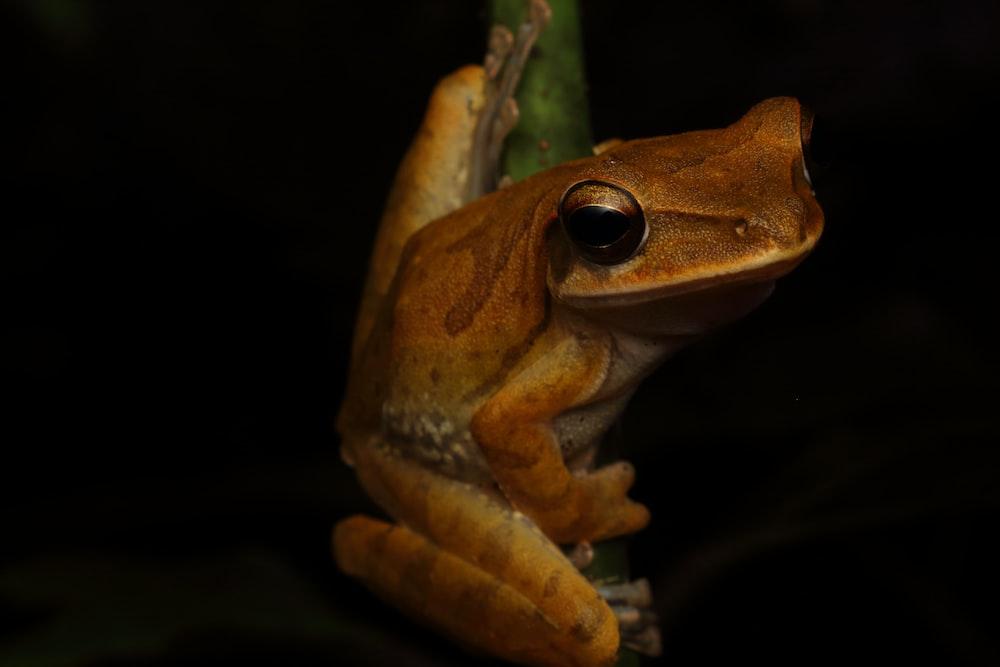 brown frog on green leaf