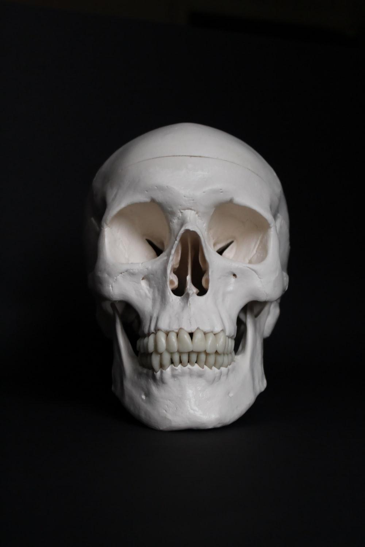 white skull on black surface