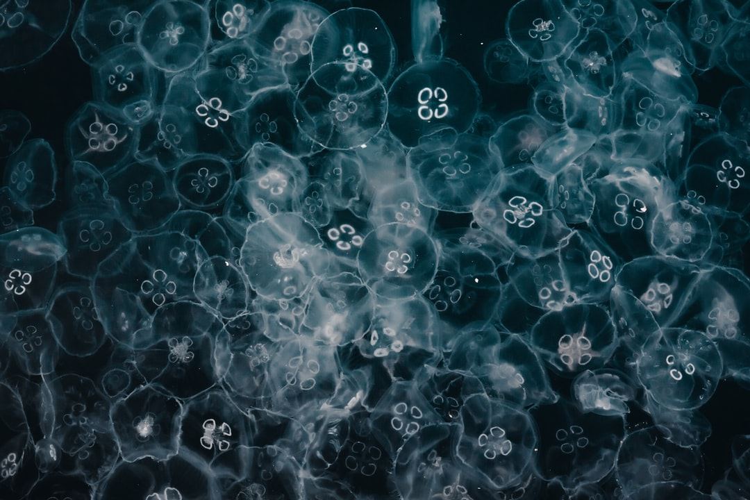 Blue and White Bubbles Illustration - unsplash
