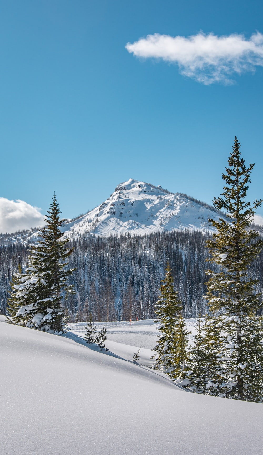 snow covered mountain and trees during daytime
