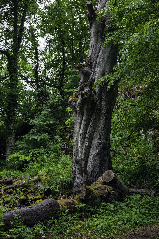 brown tree trunk on brown dried leaves