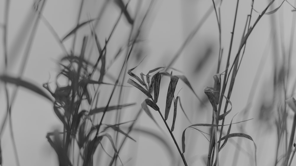 grayscale photo of plant leaves
