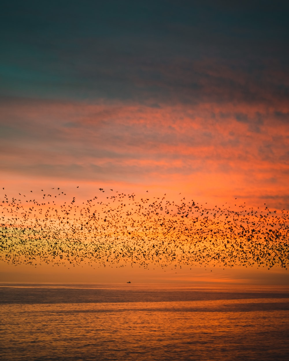 flock of birds flying over the sea during sunset