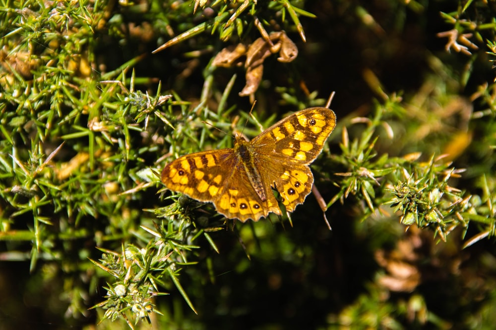 brown and black butterfly on green plant