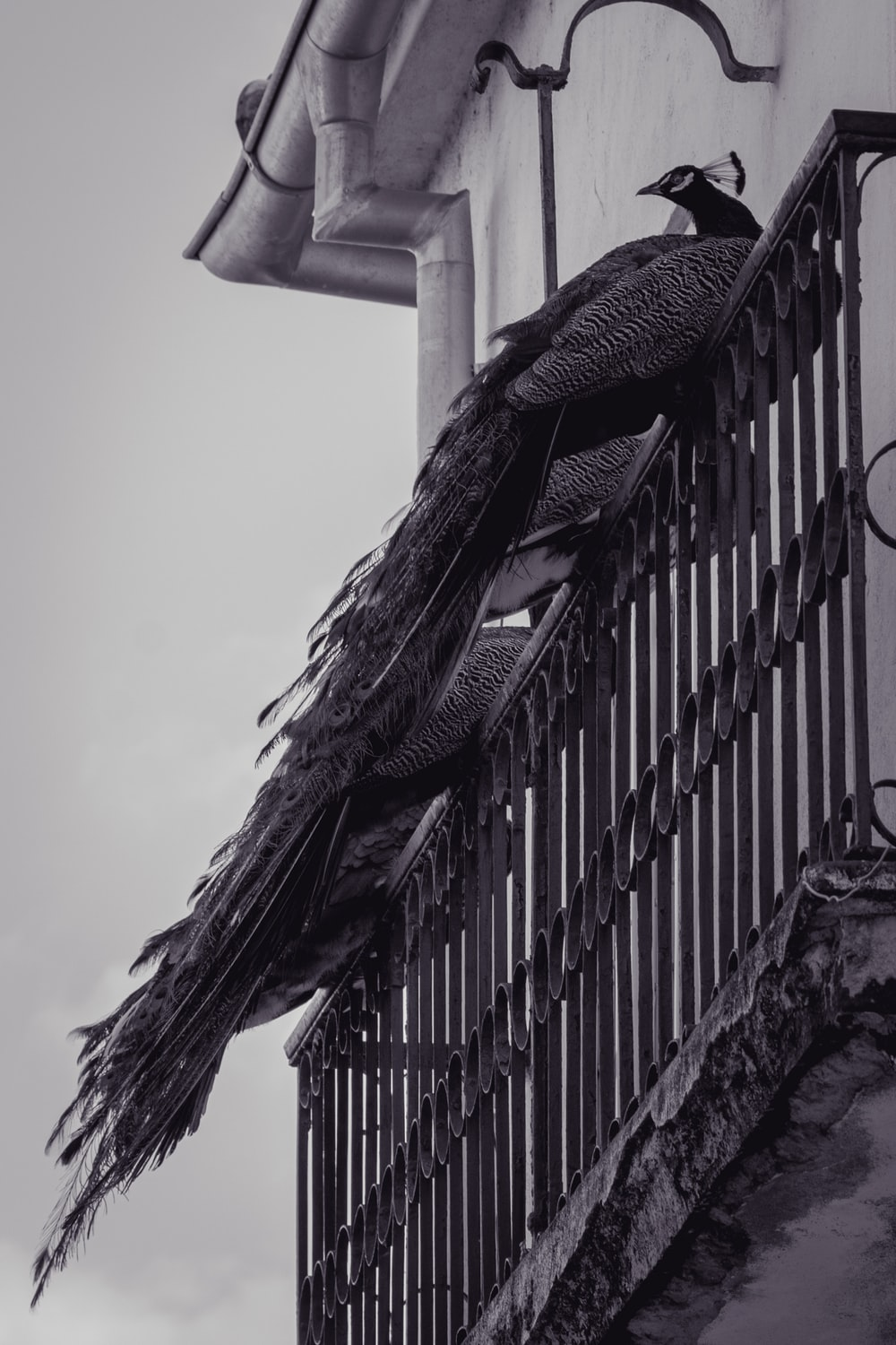 grayscale photo of bird on top of metal fence
