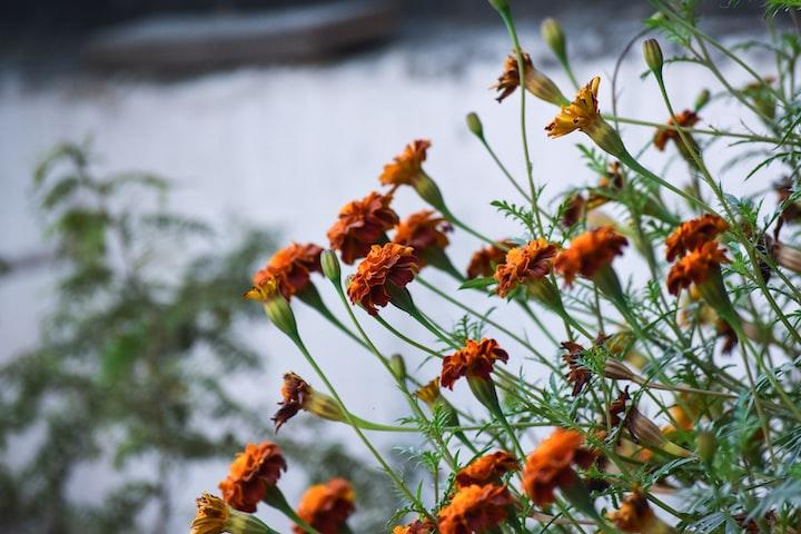 Death Wears a Crown of Flowers
