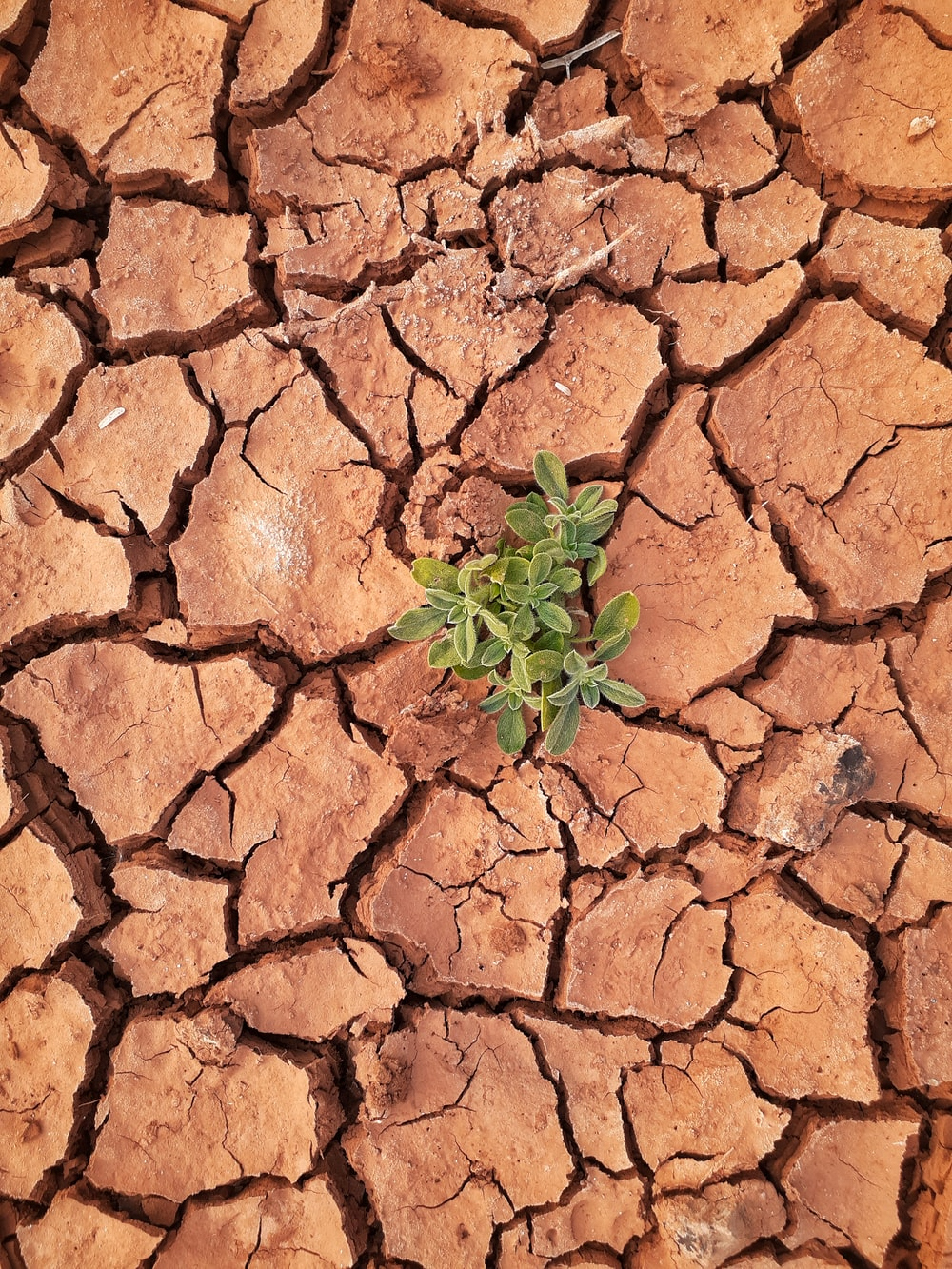 green plant on brown soil