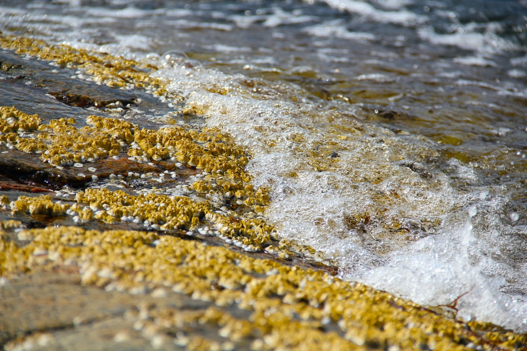 Water washing over barnacles.