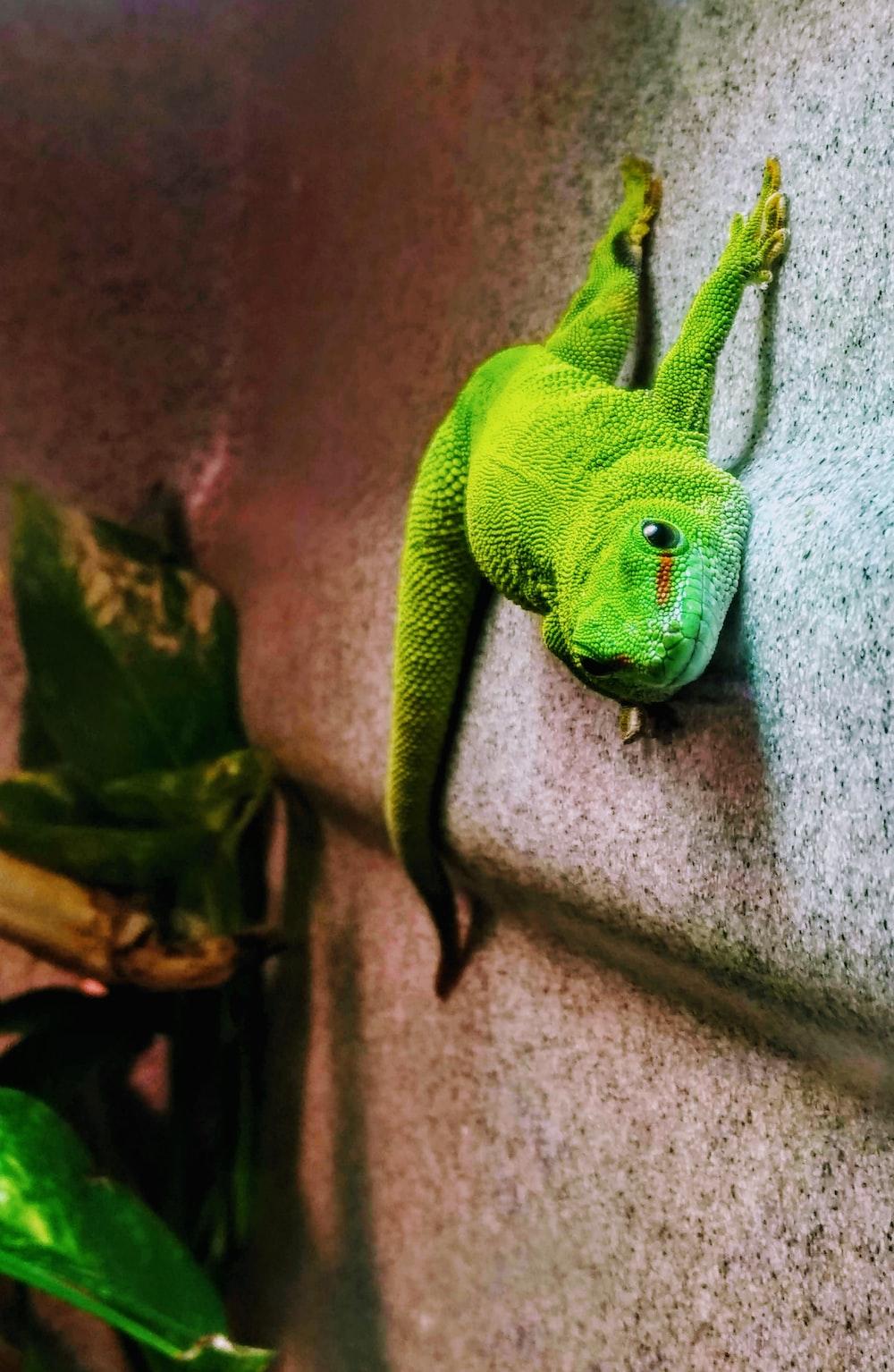 green crocodile plush toy on gray concrete wall