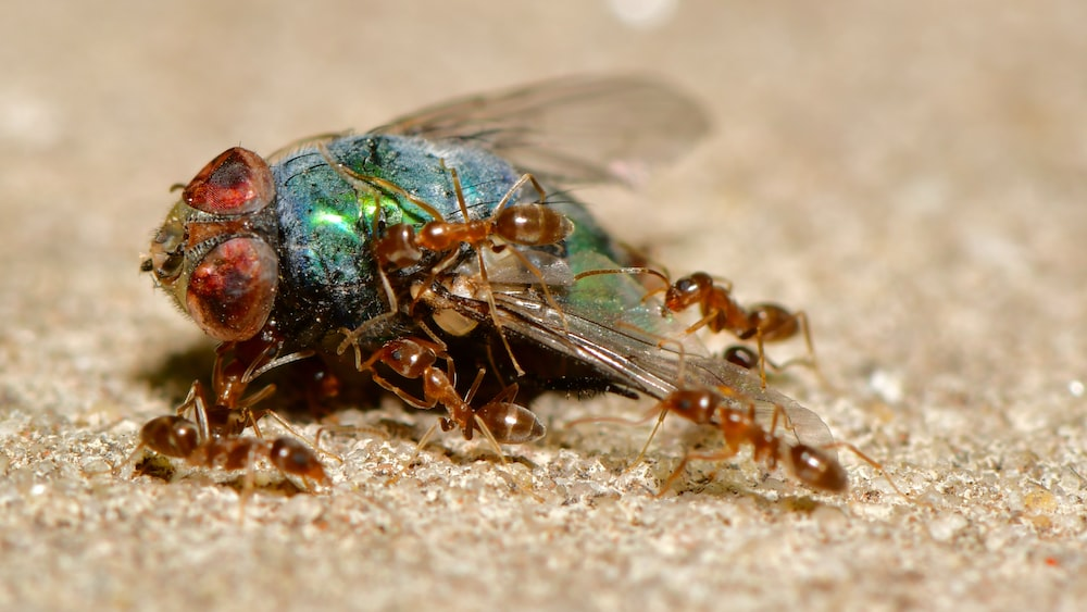 green and black insect on brown sand