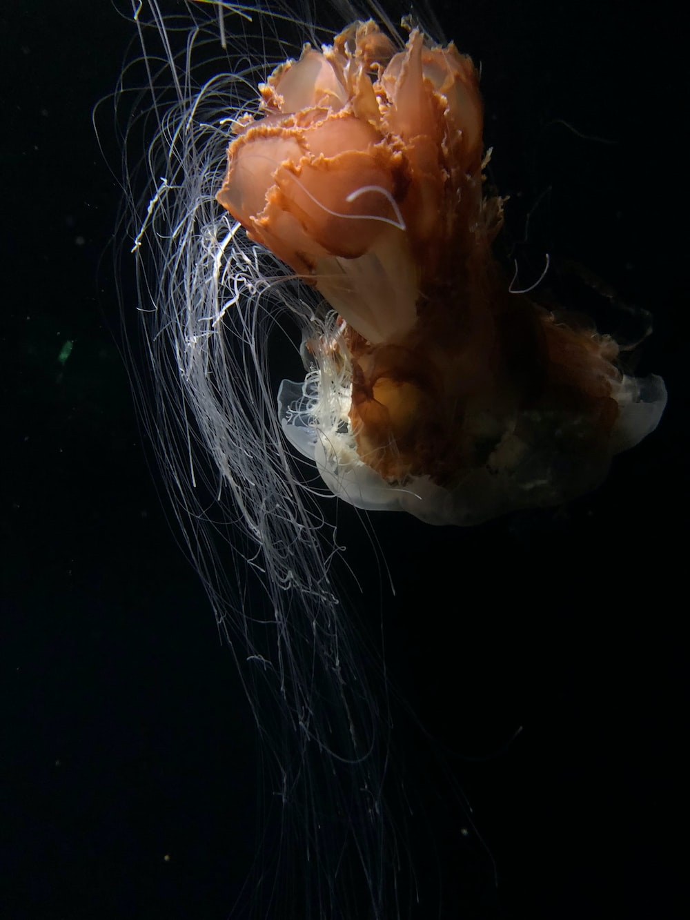 white and brown jellyfish in water