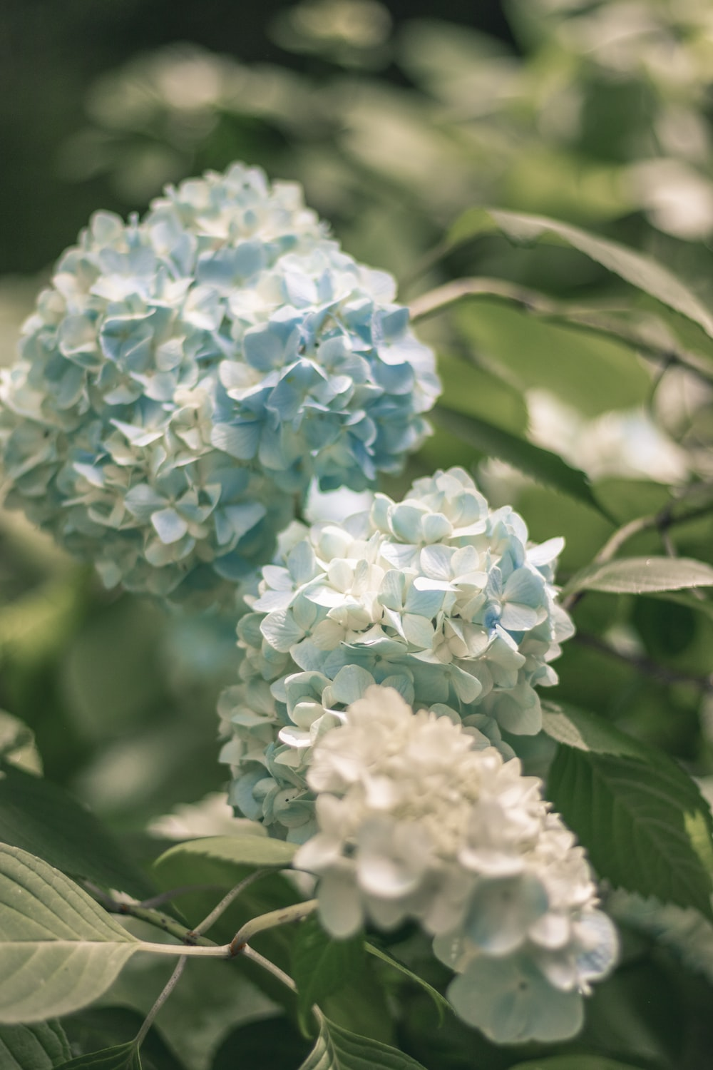 white and blue flower in close up photography