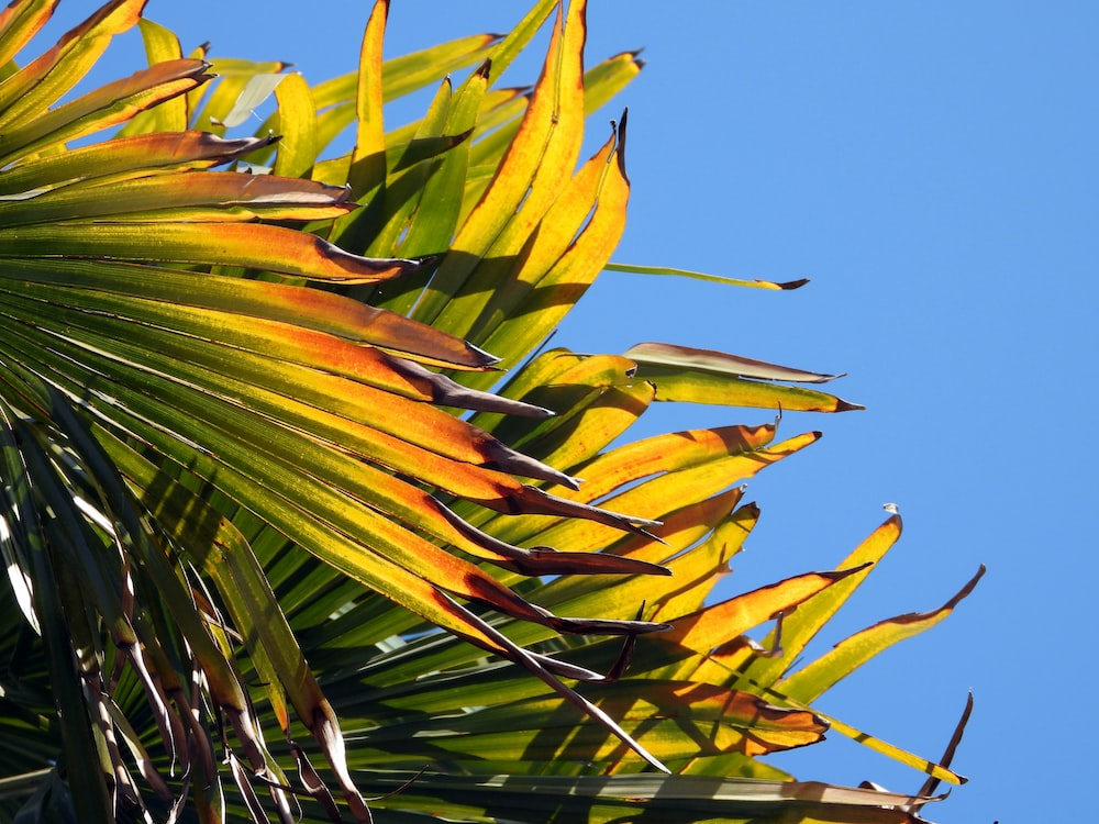 green and yellow leaves under blue sky during daytime