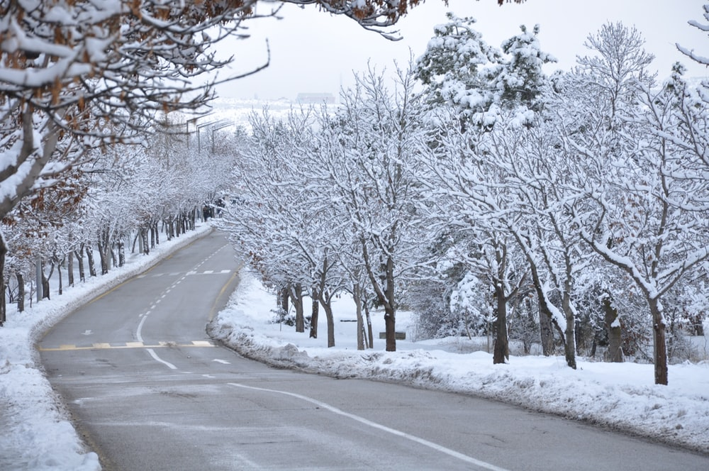 road between trees covered with snow