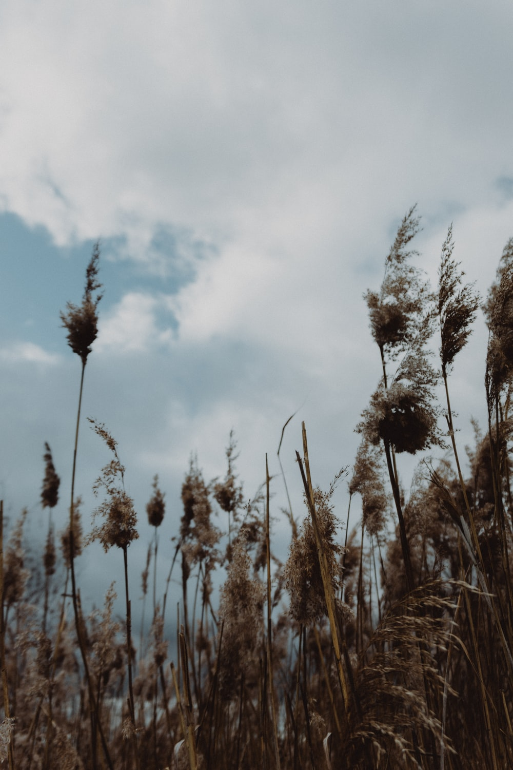 brown wheat field under cloudy sky during daytime