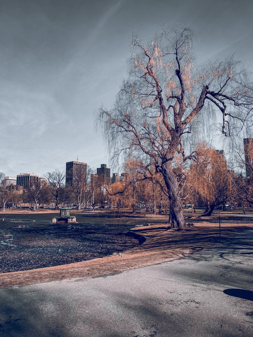 leafless trees near city buildings under cloudy sky during daytime