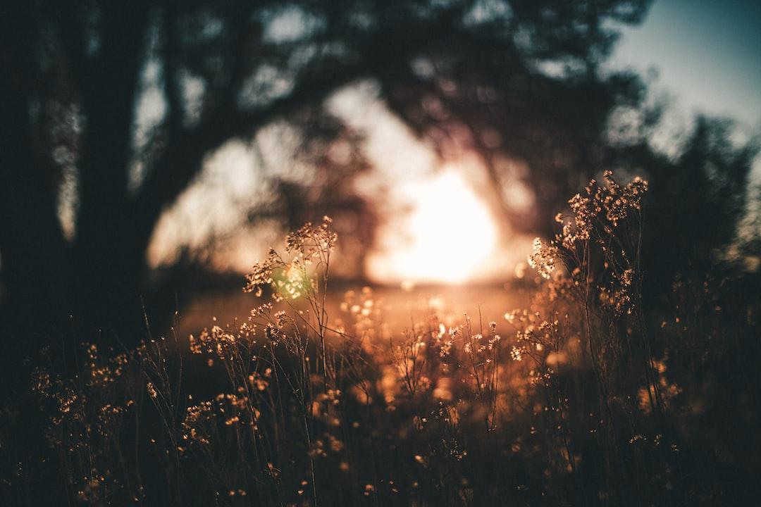 Green Grass Field During Sunset - unsplash