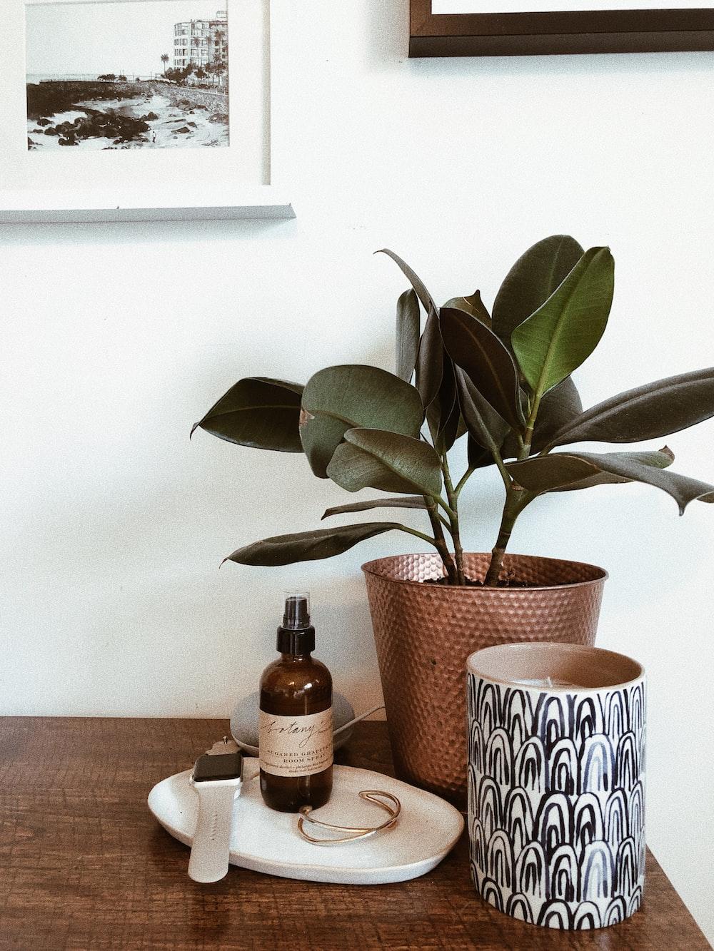 green plant in brown ceramic vase